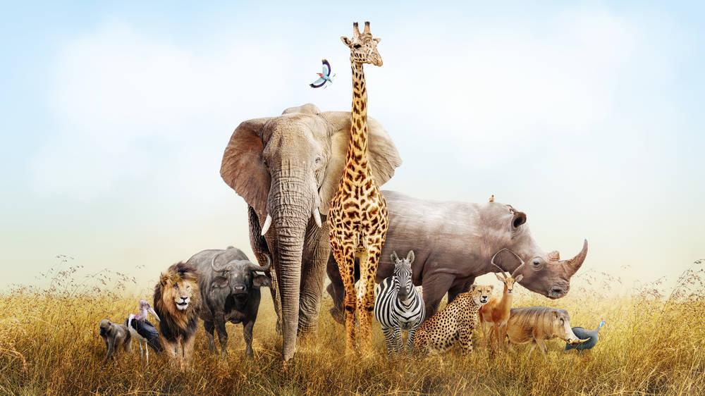 Siete curiosidades sobre los animales