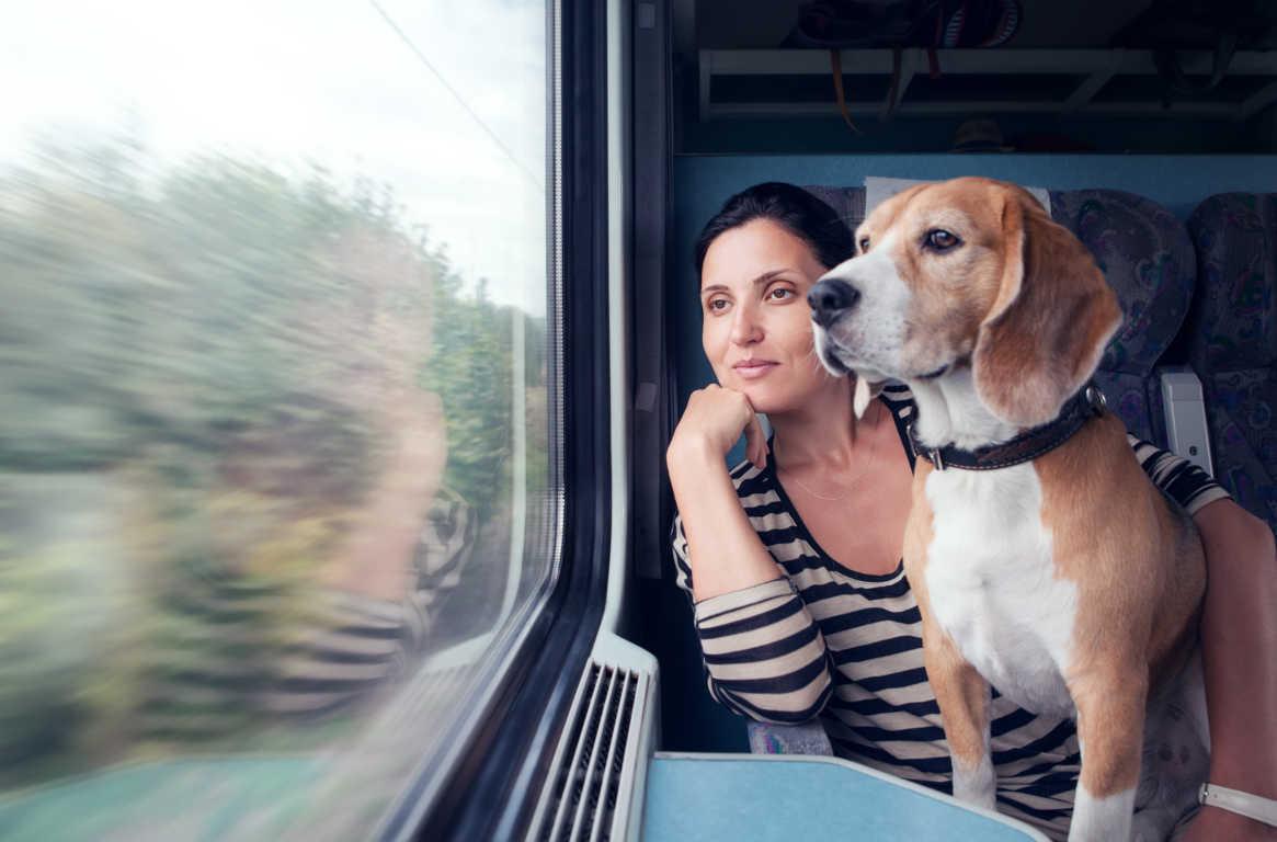 Ya puedes viajar con tu mascota